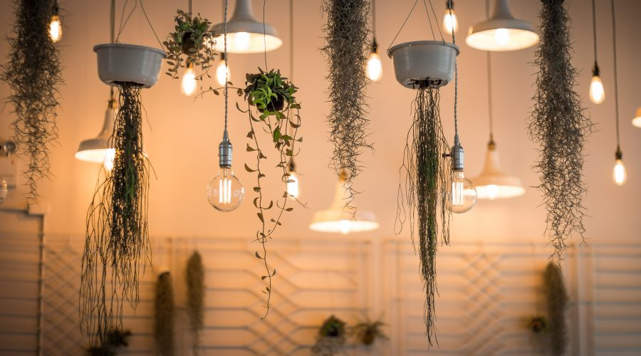 Hanging planters and simplistic light bulbs as part of interior design project